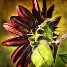 Spicy Sunflower Painting by DiEtte Henderson