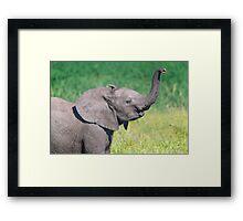 Elephant Calf Greeting Framed Print