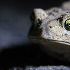 Eye of the Toad by Sheryl Hopkins