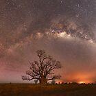 Boab Trees, Bushfires and Bright Stars by Rod Hartvigsen