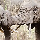 Elephants by ollygriffin