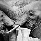elephant  by ollygriffin