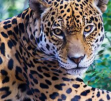 Jaguar by BGSPhoto