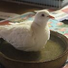 Little White Dove 4 - enjoying a bath by Maree  Clarkson