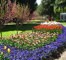 Tulip Time in Australia 15 Photograph by Heatherian by Heatherian