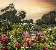 Spectacle of Roses by Jessica Jenney