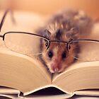 Hamster The Reader  by LenkaOBS