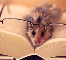Hamster The Reader  by LenkaOBS