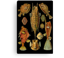 Fishes on Black Canvas Print