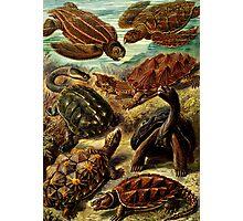 Land and Sea Turtles Photographic Print