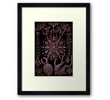 Cross Section  of Phaeodarea by Haeckel Framed Print