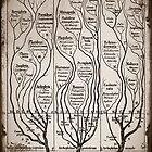 Tree Chart Plantae Protista and Animali by dianegaddis