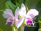 Pretty Pink & Iris by KazM