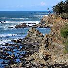 Cape Arago, Oregon by Moira Drake