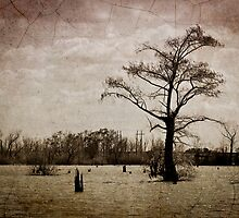Louisiana Landscape by RayDevlin