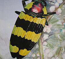 Jewel Beetle by Heather Holland by Heatherian