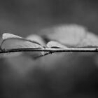 Ant on twig #5424-20140530 by Philip Werner