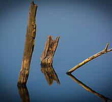 Reflected Woods by OzPhoto