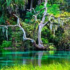 Emerald Paradise, Rainbow Springs Florida by NatureGreeting Cards ©ccwri