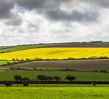 Farmers Fields, Pembrokeshire by Heidi Stewart