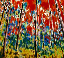 Wild Forest Chroma by Susan Nixon