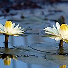 Water Lilies by Marylou Badeaux