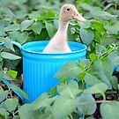 Flower Pot Duck by Tracy Jones