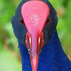 A Purple Swamphen - Another Long-Range Portrait by stevealder