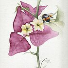 Bougainvillea with Bee by Ray Shuell
