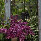 Lilacs by Halobrianna
