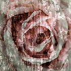 Rose Collage by Lozzar Flowers & Art