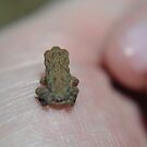 Teensy frog by Kate Farkas
