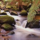 Creek, North-west Tasmania by mindy23