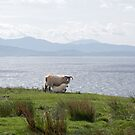 Sheep and the Sound of Sleat by Sue Robinson