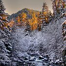 In All His Glory ~ Brice Creek ~ by Charles & Patricia   Harkins ~ Picture Oregon