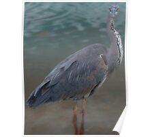 Who me? Heron Poster