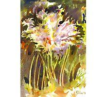 Surprise Lilies II A Portrait Photographic Print