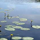 Water and lily's by ienemien