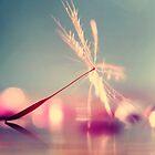 Wish by alyphoto