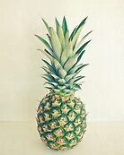 Pineapple by Cassia