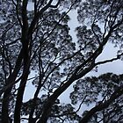 Mallee silhouette by TwoShoes