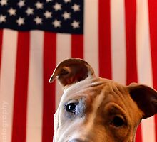 Pitbull for President by Byron Croft, Croft Photography by ByronCroft