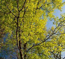 Spring Glory by Susan Nixon