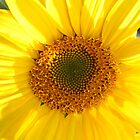 Sunflower by TwoShoes
