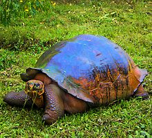 Giant Tortuga On Santa Cruz In The Galapagos by Al Bourassa
