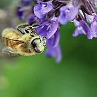 Fuzzy of a Bee by Keala