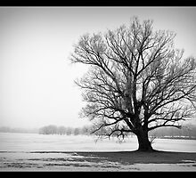 Photograph of Dark Tree by Frozen Lake by NoblePhotosCard