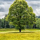 The Lone Tree by M.S. Photography/Art