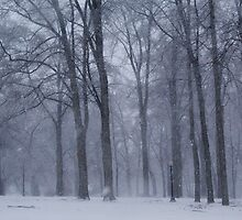 Dreamy Snowfall in Woods by NoblePhotosCard