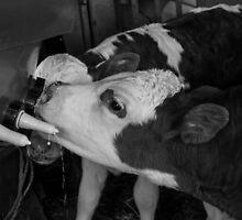 The Milk Bar by Belinda Osgood